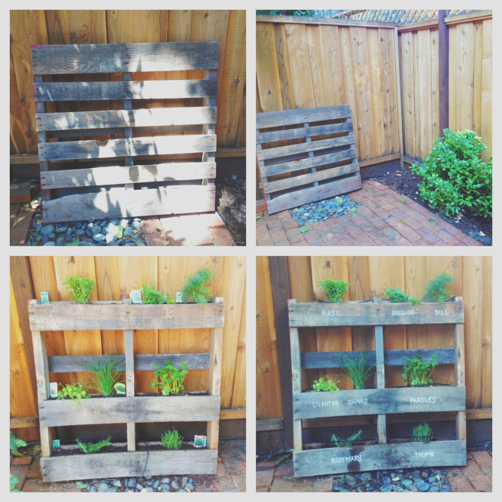 Pics for vertical herb garden pallet for Herb pallet